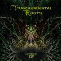 Compilation: Transcendental Roots