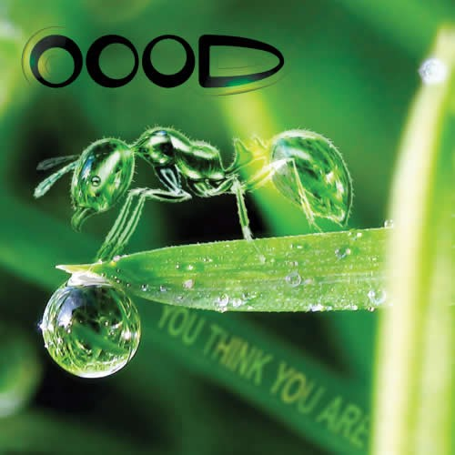 OOOD - You Think You Are