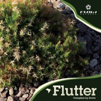 Compilation: Flutter