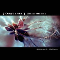 Compilation: [ Oxycanta ] Winter Blooms