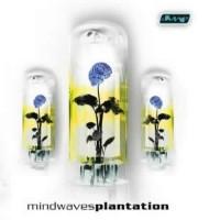 Compilation: Plantation